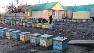 Весенняя выставка пчел