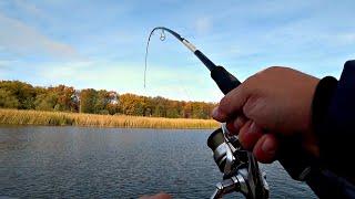СМОТРИТЕ КАК ОНА ЕГО ПОДХВАТИЛА! Щука начала жрать! Рыбалка на спиннинг!