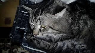 Кот греется у батареи