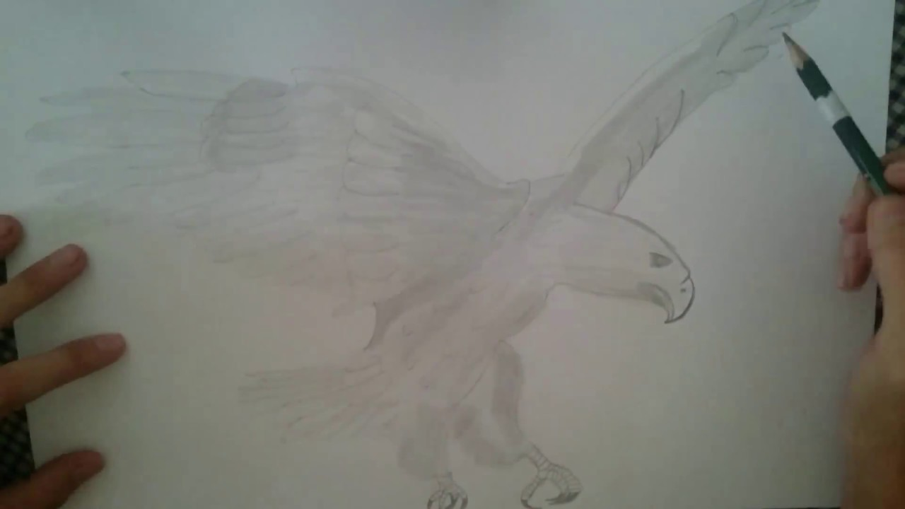 How to draw a bald eagle mss kwan drawing