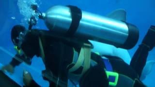 小白鯨可愛的咬了潛水哥哥