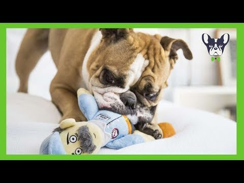 Funny Dogs Playing With Toys (2018)