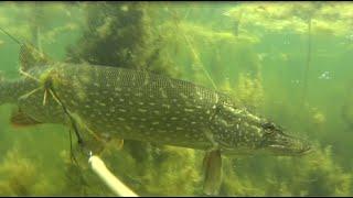 Подводная охота г Челябинск / Spearfishing Chelyabinsk
