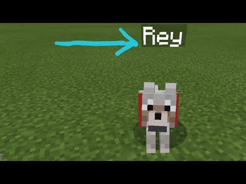 How To Name Animals In Minecraft