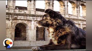 Rescue Dog Travels The World With Her Family | The Dodo