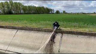 La Guardia Civil rescata a un corzo que había caído a una acequia