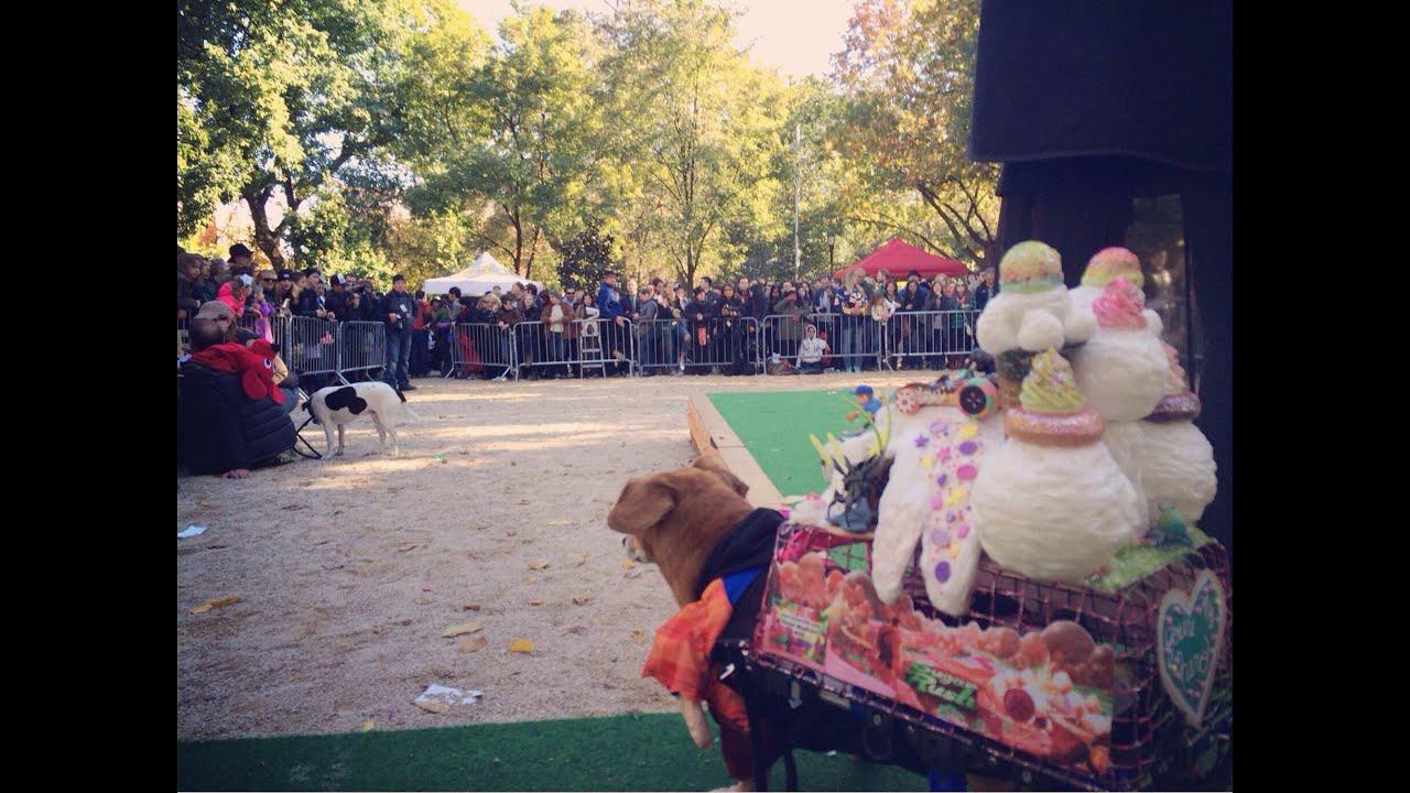Wheelchair Dog has a Sweet Halloween Costume