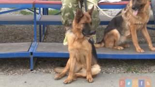 Клуб собаководов готовится ко Дню города