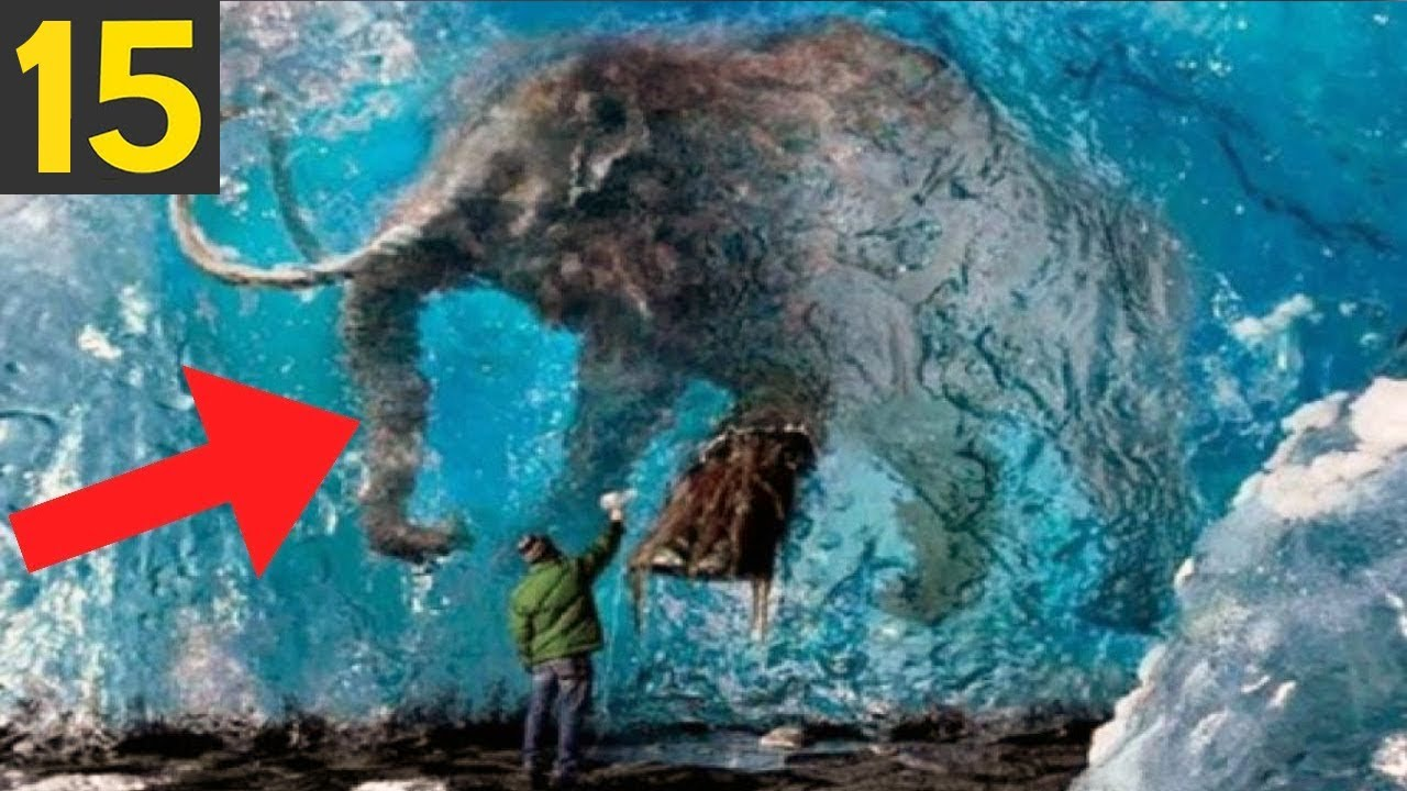 15 Animals Caught FROZEN in Time