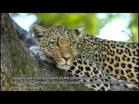 Amazing Facts Chitwan National Park, Nepal