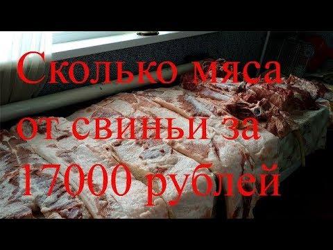 """Сколько мяса от свиньи за год?Зарезали кабана """"Пигус""""!Правильный разруб и опаливание туши. Обмером!"""