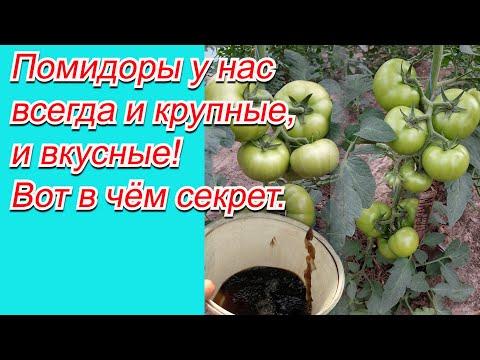 Подкормка томатов, от