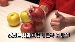 맛있는 사과, 안심되는 명절선물. 이렇게 골라보세요! …