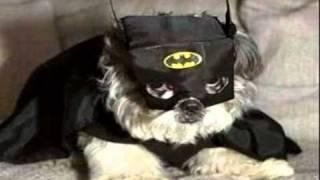 Free Ebook:  Puppy Training For Dummies