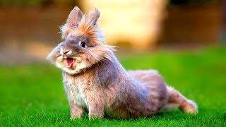 মজার প্রাণী খরগোশ   Funny Rabbits - Cute Baby Bunnies - Funny Baby Videos - Cute Rabbit Video