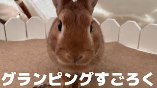 【癒やし】動物たちとキャンプ!うさぎと過ごすアニマルグランピング Camp with a cute rabbit
