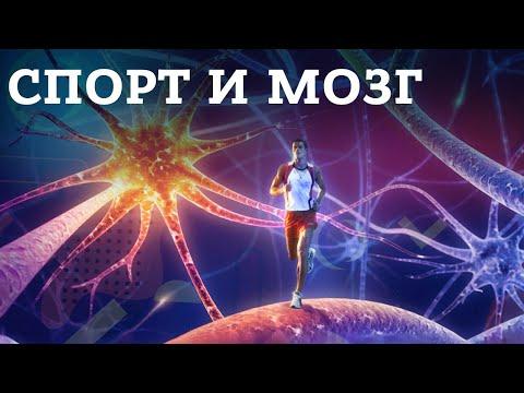 Влияние физической активности и спорта на мозг