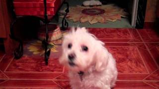 FURMATA - THE SINGING DOG Thumbnail