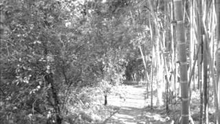 OPTIMISTA -Bambuco de  Leon Cardona. Cuarteto Gentil Montaña. Bogotá 2002