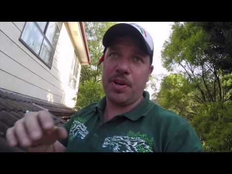 What does a termite infestation look like and how to fix it