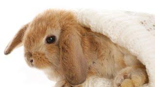 Кролики-первый день кролика дома
