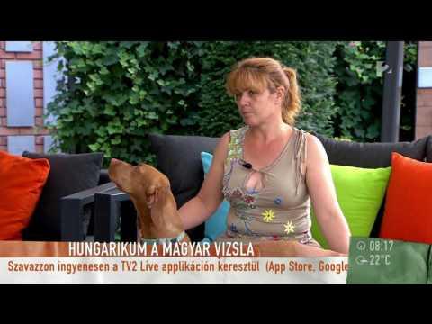 ˝Világsztár˝ lett a magyar vizsla - tv2humokka