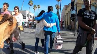 Cash 2.0 Great Dane at the 3rd street promenade in Santa Monica