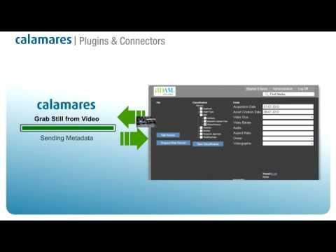Calamares & Digital Asset Management Systems