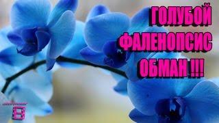 видео Вялые листья или почему тургор не возвращается