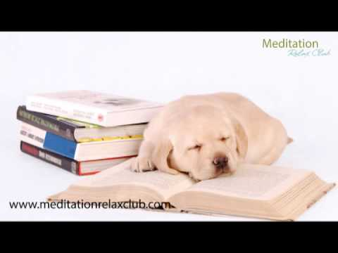 Sleepy Animals Pet Therapy Music: Relaxing Music for Dogs and Cats