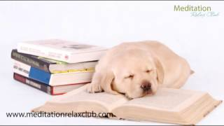 Repeat youtube video Sleepy Animals Pet Therapy Music: Relaxing Music for Dogs and Cats