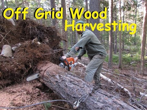 Living Off The Grid: REAL Life  Fire Wood Harvesting