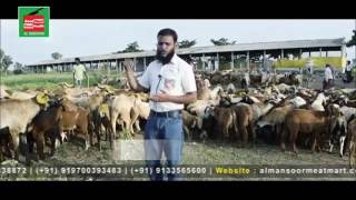 INDIA'S SUCCESSFUL SHEEP & GOAT FARM N BEST MEAT MART- SUPER