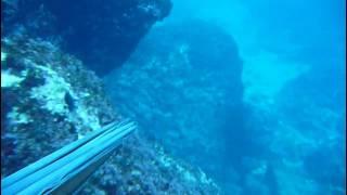 Pesca Submarina - Lubina 2.6 Kg 03-02-2010