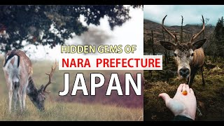 Deer | Shika (japanese) is the famous symbol of the City of Nara. Getting up close with these animals where there were thousands of them in the Park. Immerse ...