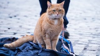 A Street Cat Named Bob - Official Trailer - At Cinemas November 4