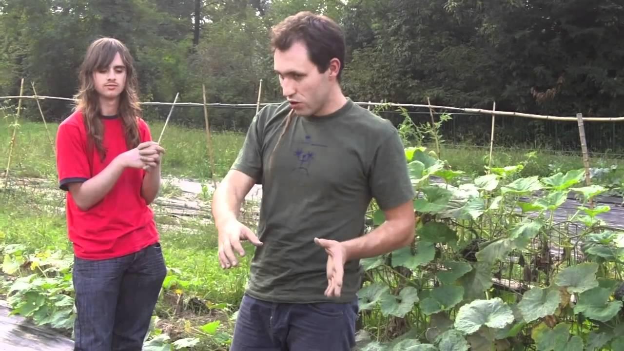 Costruire Una Mini Serra Riscaldata come costruire una serra tunnel dopo la semina invernale