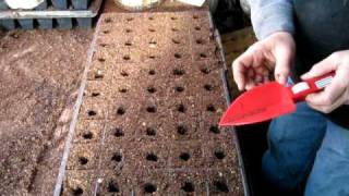 starting cauliflower seeds at Hartz Produce
