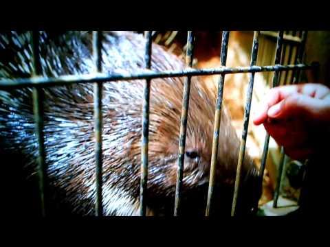 Weird Wonders of the World: Sad Porcupine