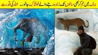 Barf Main Jam Kr Bhi Saalo Tak Zinda Rehny Wale Jaanwar  Strange Animals Found Frozen In Ice