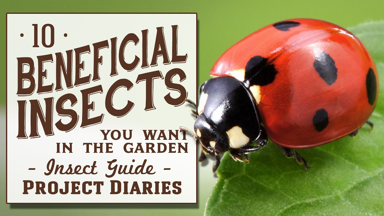 10 Beneficial Insects You Want In The Garden (Insect Guide)