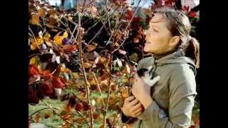 perukowiec,drzewko dym (cotinus coggygria 'royal purple')