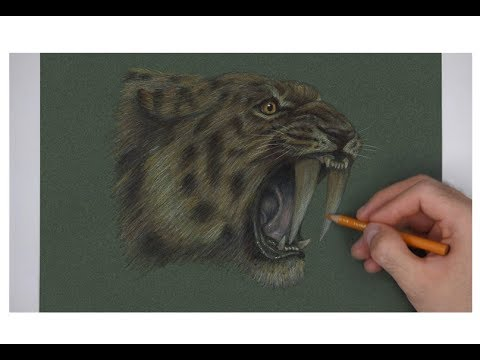 Special Smilodon Saber Tooth Portrait Drawing