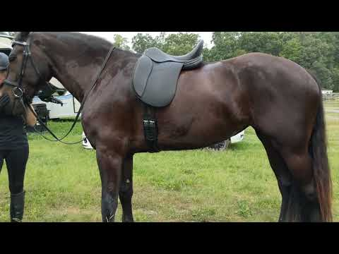 Typical Saddle Fit VS Peter Horobins Stride Free Tree