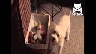 Dog Picks Up All Of His Toys]