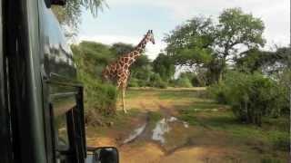 Kenya Safari - Samburu, Masai Mara and Diani Beach, Mobassa