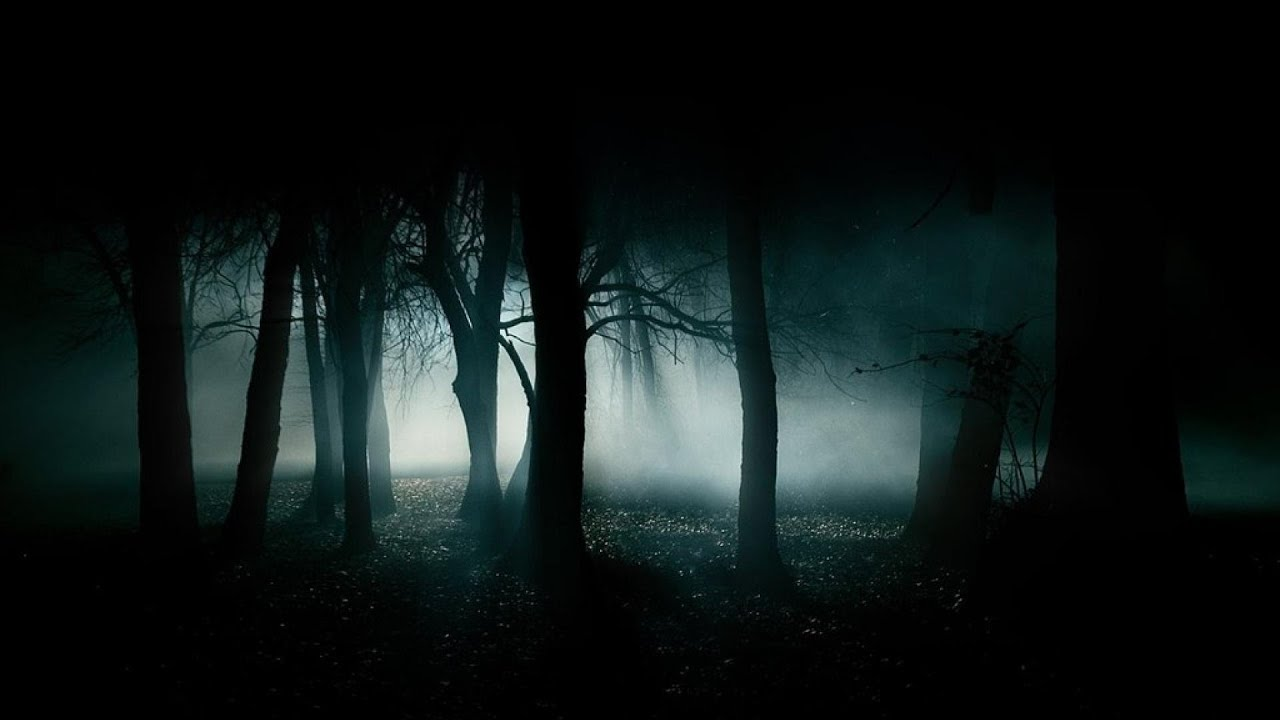 forest at night crickets