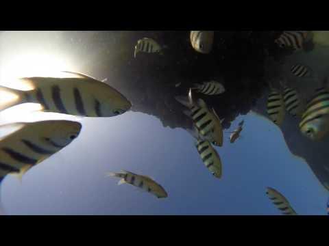 Fraser Island 2014 - Champagne Pools