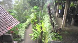 Heavy rains at coffee & tea plantation - Bali, Indonesia