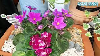 남사 화훼단지 예삐플라워아울렛 공기정화식물 이름과가격 …